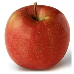 نهال سیب